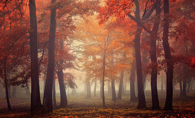 Mist Wall Art - Photograph - Feel by Ildiko Neer