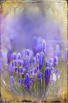 Print featuring the photograph Feelin' Blue ... by Chris Armytage