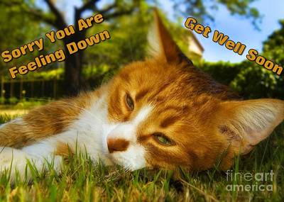 Digital Art - Feeling Down Kitty by JH Designs