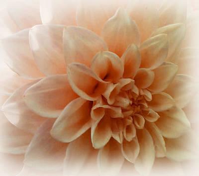 Feeling Peachy Art Print by Faye Symons