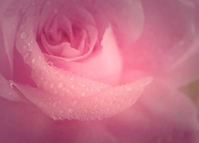Feelings Photograph - Feeling Sweet by The Art Of Marilyn Ridoutt-Greene