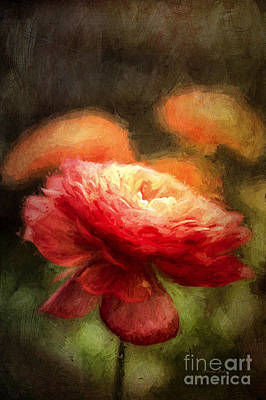 Buttercup Flower Photograph - Feeling Van Gogh by Darren Fisher