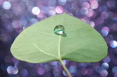 Photograph - Feeling Zen by Krissy Katsimbras