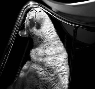 Photograph - Feels So Good by Nikolyn McDonald