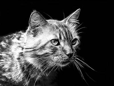 Black And White Cat Digital Art - Feline by Camille Lopez