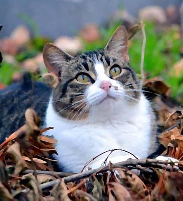 Photograph - Feline Focus by Deena Stoddard