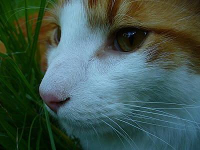 Cat Photograph - Feline Focus by Kchink Flinch