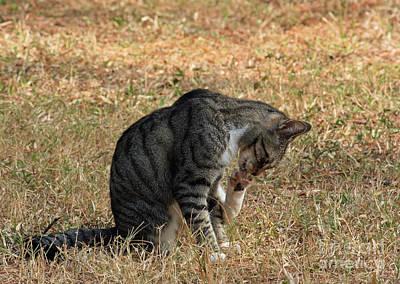 Photograph - Feline Pet-icure by Terri Mills