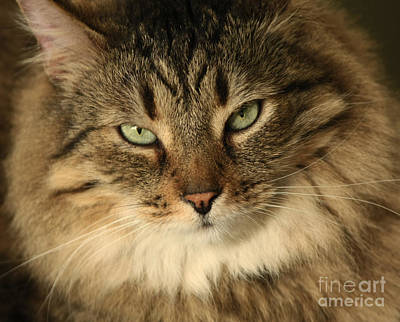 Feline Pleasures Art Print by Inspired Nature Photography Fine Art Photography