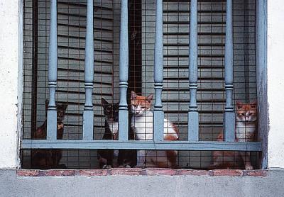 Feline Prisoners Art Print by Anthony Dalton
