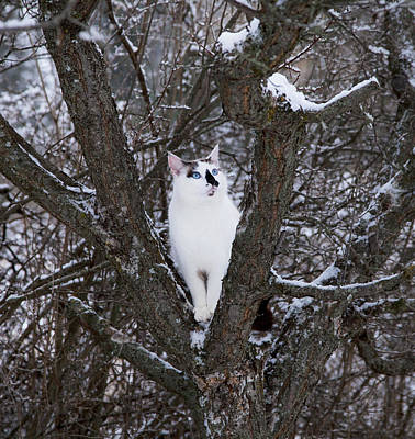 Photograph - Felis Silvestris Catus In Winter by Theresa Tahara