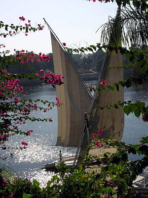 Photograph - Feluccas On The Nile - Egypt by Jacqueline M Lewis