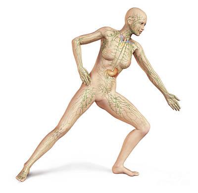 Color Bending Digital Art - Female Body In Dynamic Posture by Leonello Calvetti