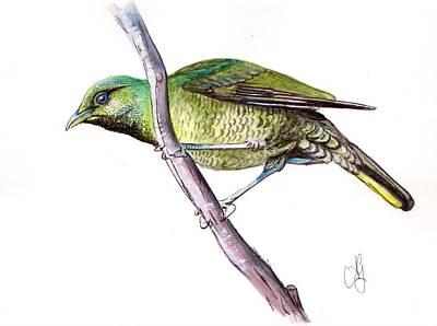Painting - Female Bower Bird  by Anne Gardner