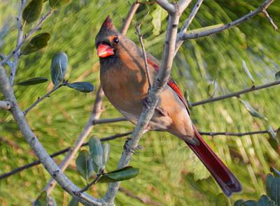 Photograph - Female Cardinal by Grace Dillon