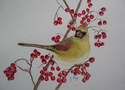 Pastel - Female Cardinal by Joan Pye