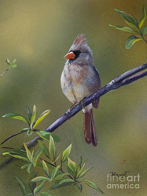 Painting - Female Cardinal  by Margit Sampogna