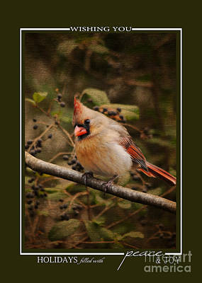 Photograph - Female Cardinal Song Bird Christmas Card by Jai Johnson