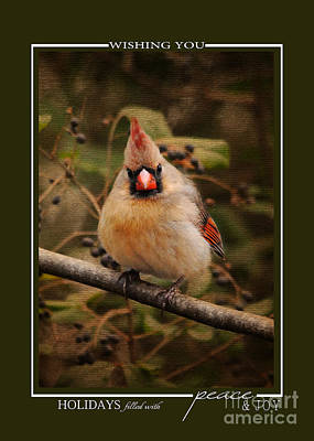 Photograph - Female Cardinal Song Bird Christmas Cards by Jai Johnson