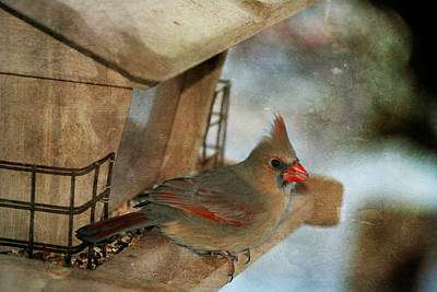 Photograph - Female Cardinal  by Susan  McMenamin