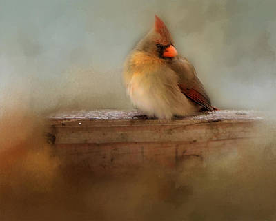 Photograph - Female Cardinal by TnBackroadsPhotos
