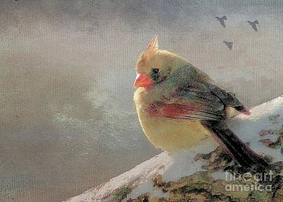 Female Cardinal V Art Print by Janette Boyd