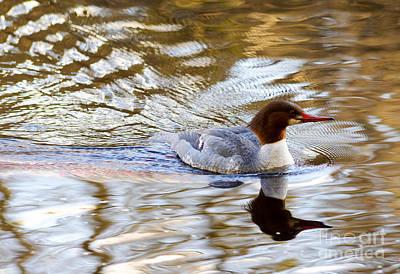 Photograph - Female Common Merganser Duck by Terry Elniski