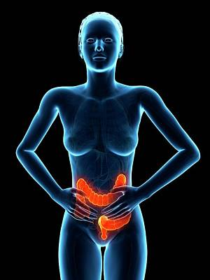Tummy Photograph - Female Digestive Pain by Sebastian Kaulitzki