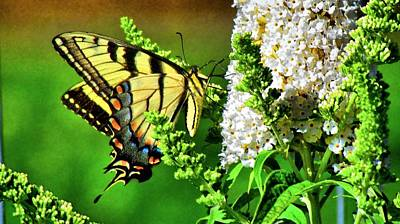 Pop Art Rights Managed Images - Female Eastern Tiger Swallowtail   Royalty-Free Image by Carol Montoya