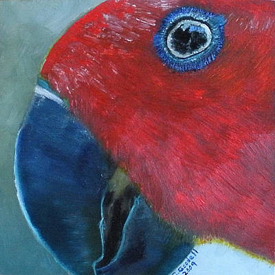 Painting - Female Eclectus by Claudia Goodell