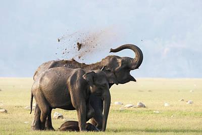 Female Elephants With Calf Art Print by Sabirmallick