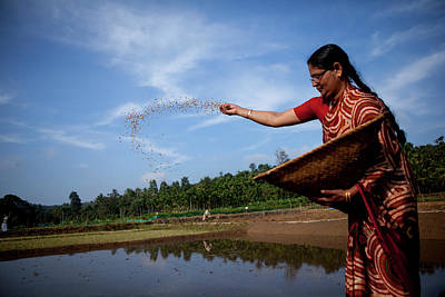 Kerala Photograph - Female Farmer Sprinkles Rice Seed In A by Simon Rawles
