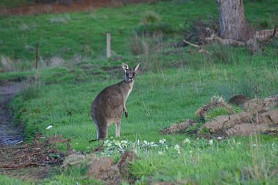 Female Kangaroo In Yarra Glen 08-07-2014 Art Print by Bert Ernie