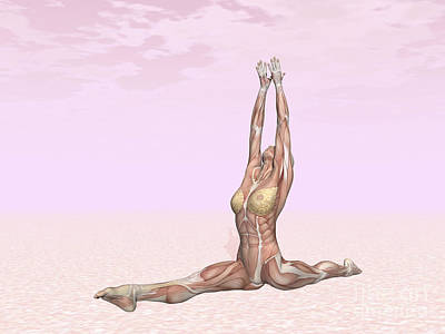 Physiology Digital Art - Female Musculature Performing Monkey by Elena Duvernay