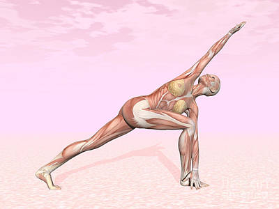 Muscular Digital Art - Female Musculature Performing Revolved by Elena Duvernay