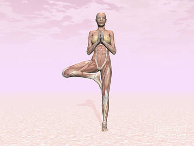 Muscular Digital Art - Female Musculature Performing Tree Yoga by Elena Duvernay