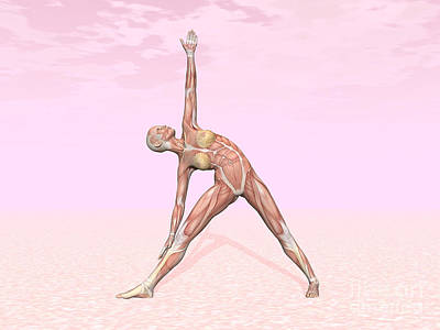 Athletic Digital Art - Female Musculature Performing Triangle by Elena Duvernay