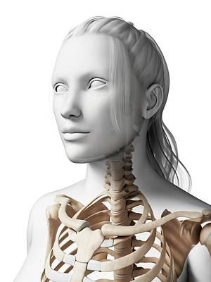 Backbone Photograph - Female Neck Bones by Sebastian Kaulitzki
