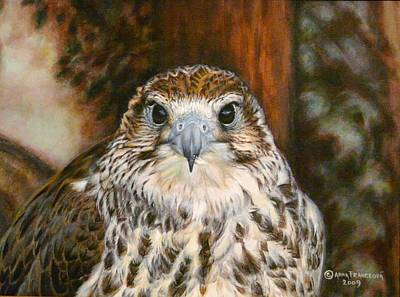 Gyr Falcon Painting - Female Of Saker Falcon by Anna Franceova