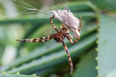 Caring Mother Photograph - Female Rain Spider Guarding Her Nest by Peter Chadwick