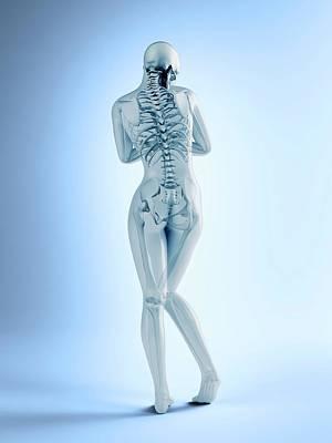 Female Skeletal Anatomy Art Print by Andrzej Wojcicki
