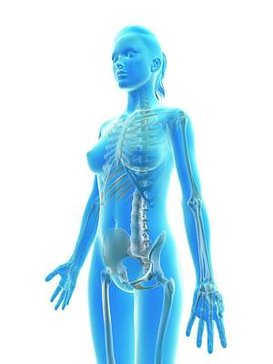 Biomedical Illustration Photograph - Female Skeletal System by Sebastian Kaulitzki
