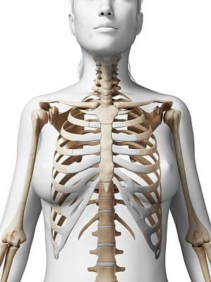 Female Skeleton Art Print by Sebastian Kaulitzki