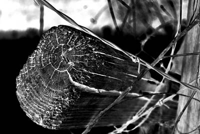 Photograph - Fence And Barbed Wire by Richelle Munzon