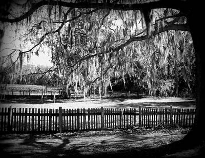 Fence And Moss Art Print by Sheri McLeroy