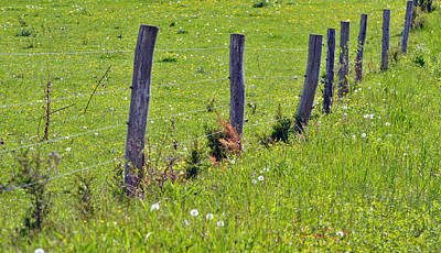 Photograph - Fence And Pasture by Judy Salcedo