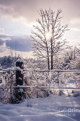 Photograph - Fence And Tree Frozen In Ice by Elena Elisseeva