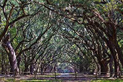 Photograph - Fence And Wormsloe In Savannah  by John McGraw