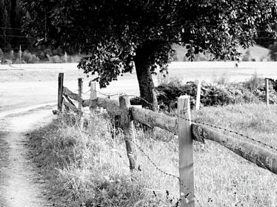 Photograph - Fence by Anita Kovacevic