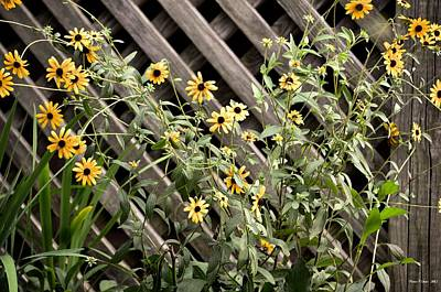 Photograph - Fence Lined Wildflowers by Maria Urso